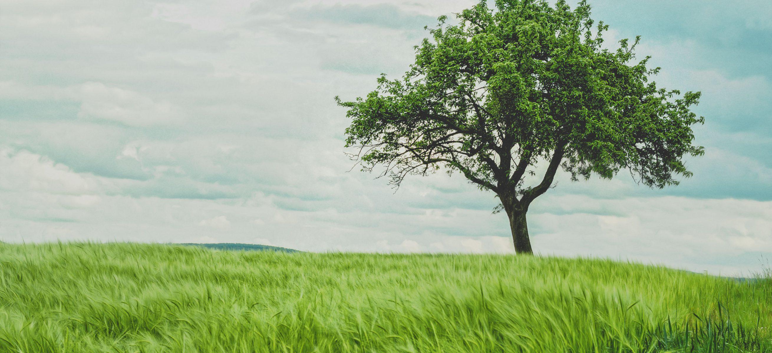 Bộ từ vựng tiếng Anh về môi trường bạn 'không thể không biết'