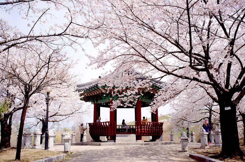 """""""Hiểu đúng và đủ về du học Hàn Quốc"""" đã bị khóa Hiểu đúng và đủ về du học Hàn Quốc"""