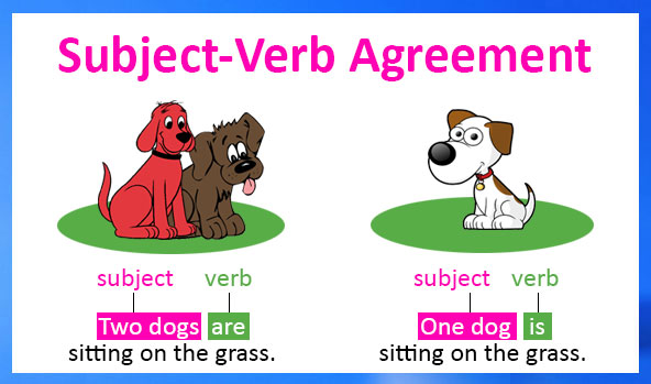 Nắm bắt sự hòa hợp giữa chủ ngữ và động từ trong câu tiếng Anh