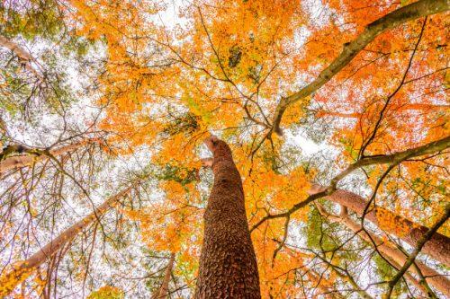 3 bước viết hay bài viết tiếng Anh miêu tả mùa thu