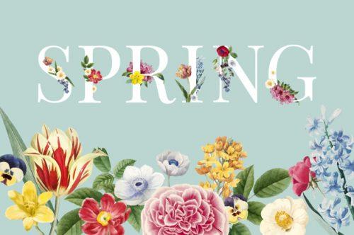 3 bước viết hay bài viết tiếng Anh miêu tả mùa xuân